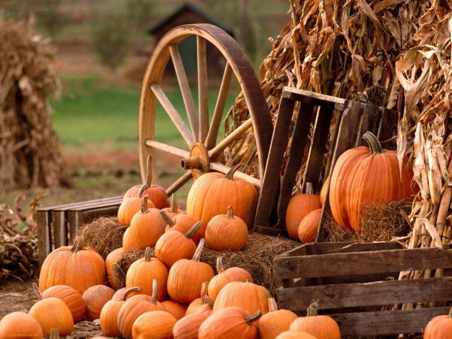 Wagon wheel and pumpkins