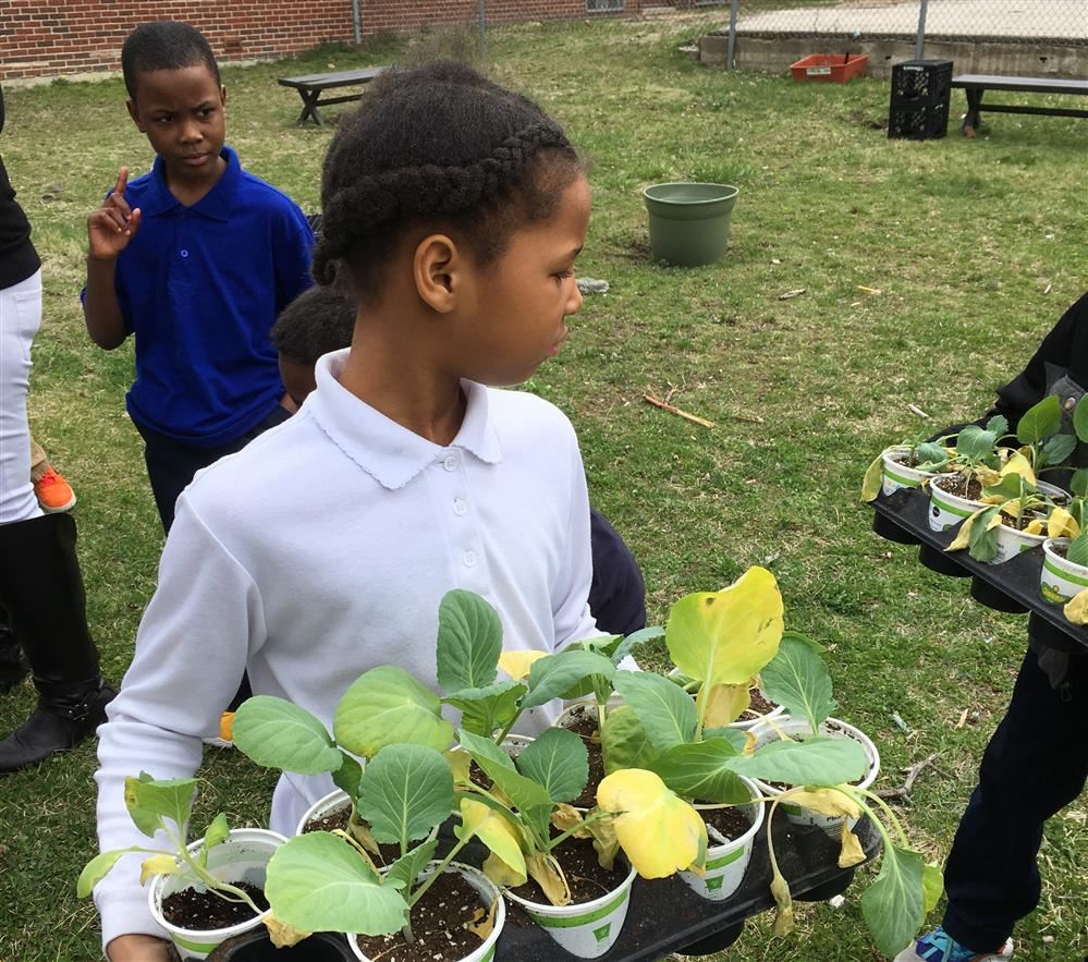 4th Graders Celebrating Earth Day By Gardening